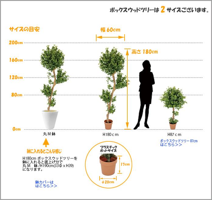 ボックスウッドツリーサイズ
